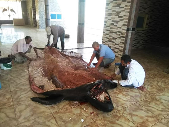 تحنيط الحوت (3)