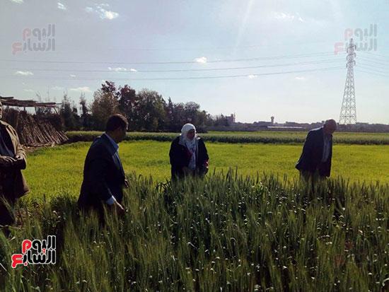 الزراعة (3)