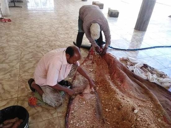 تحنيط الحوت (5)
