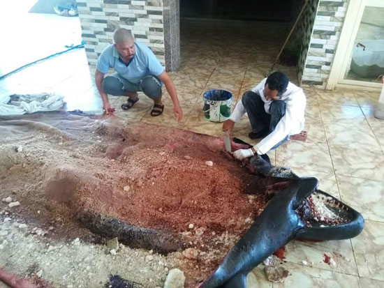 تحنيط الحوت (6)