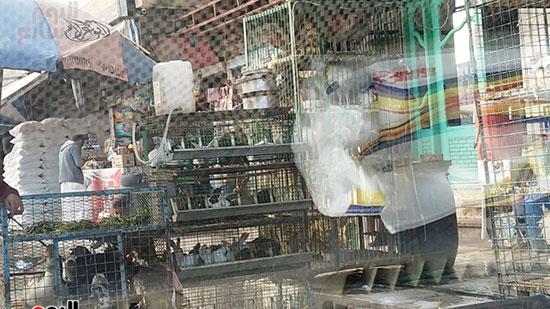 تداول وذبح الطيور فى المحافظات (5)