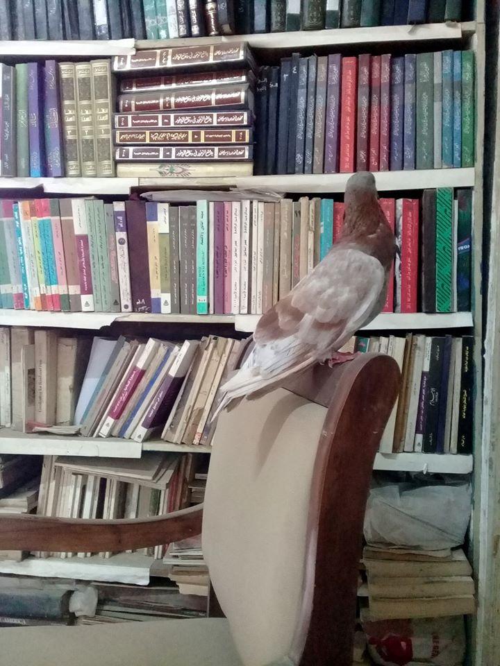 مكتبات القراء (8)