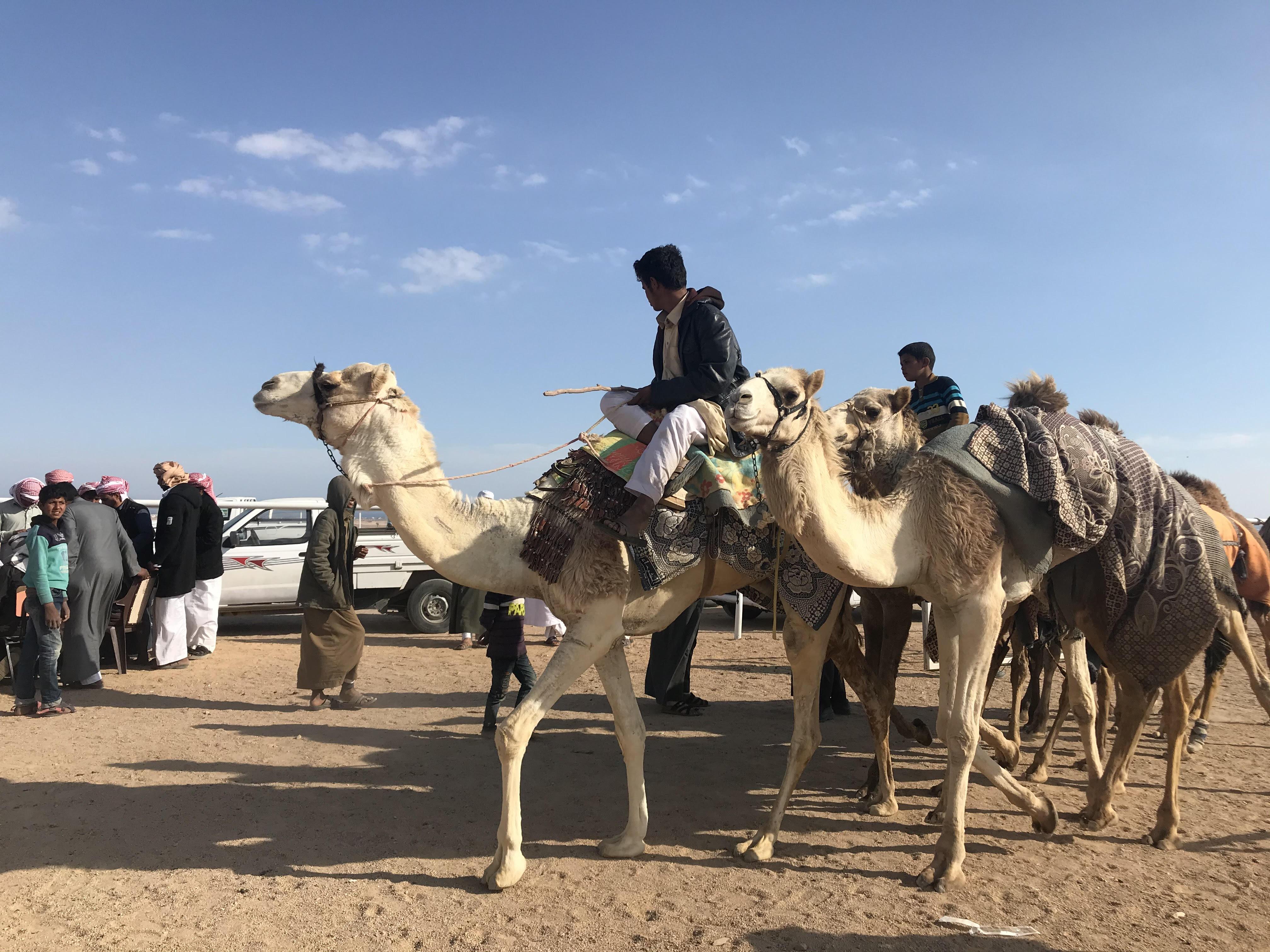 مهرجان الهجن بشرم الشيخ (6)