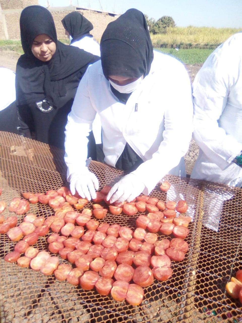 مشروع تجفيف الطماطم  (2)