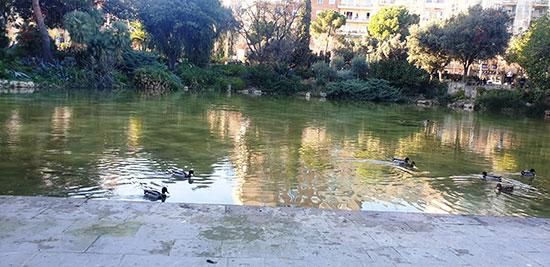 بحيرة-البط