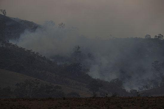 الدخان يتصاعد من بقايا الأشجار