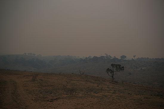الحرائق مستمرة فى غابات استراليا