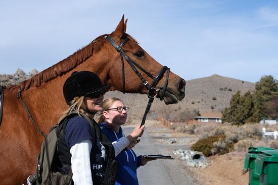حملة ساندرز بالخيول فى نيفادا
