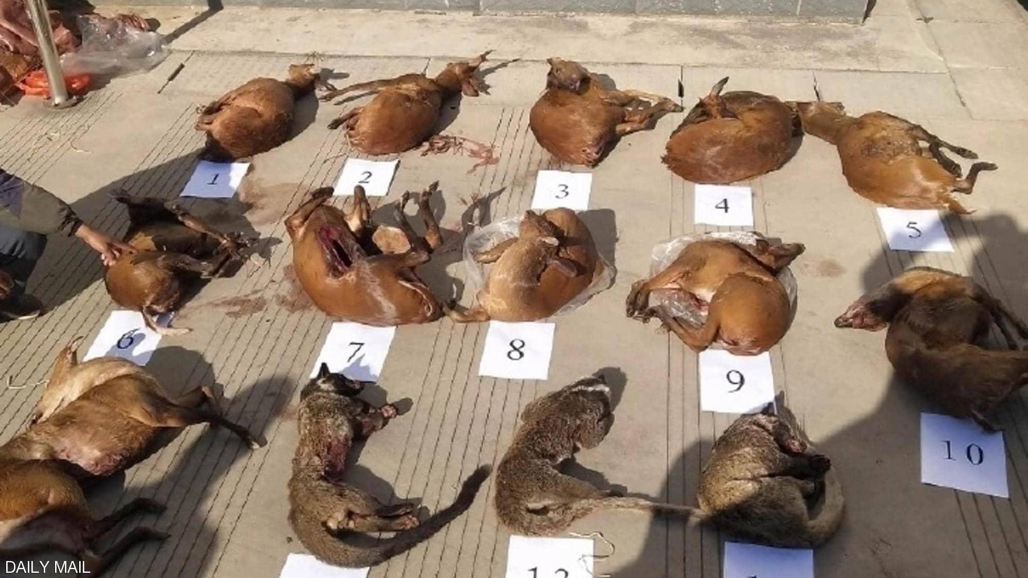 الشرطة عثرت مع المهرب على 11 أيلا صغيرا و3 قطط زباد