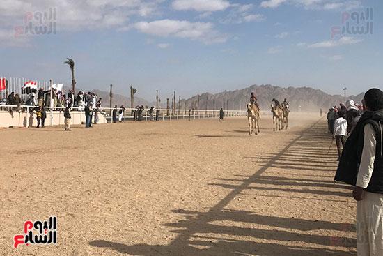 سباق-مهرجان-شرم-الشيخ-للهجن