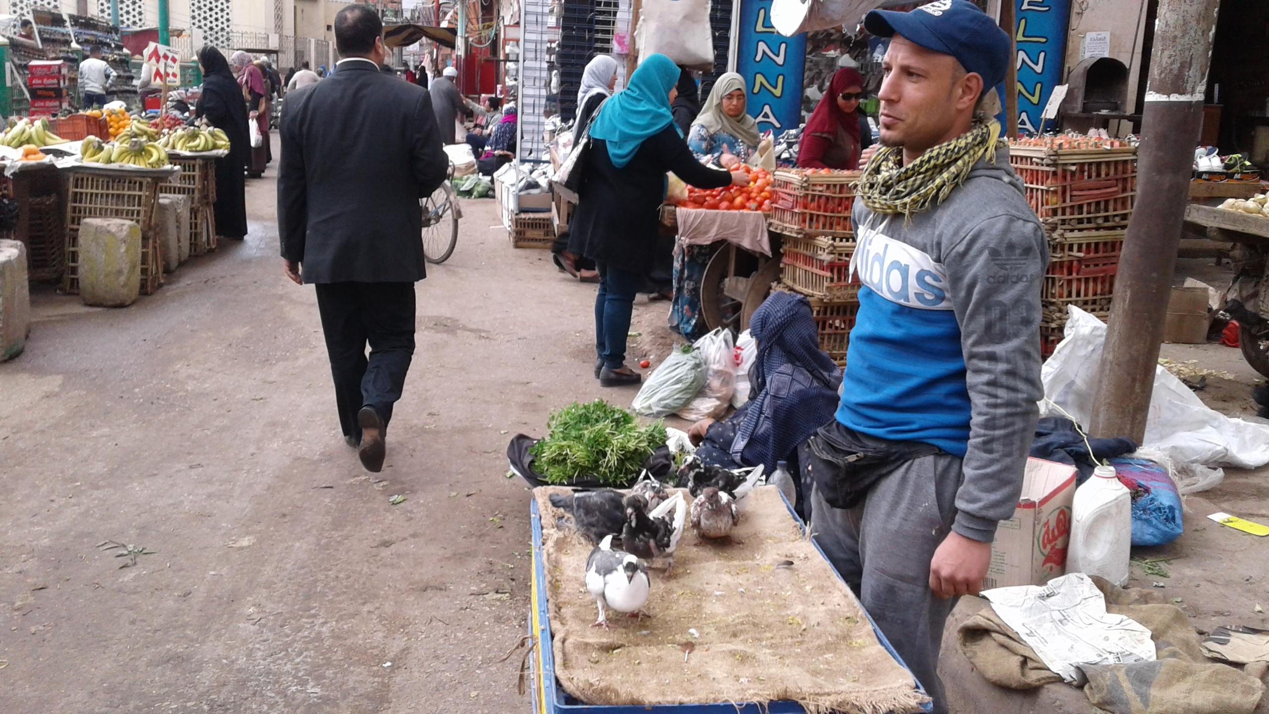 ذبح الطيور خارج المجازر ووسط الشوارع (3)