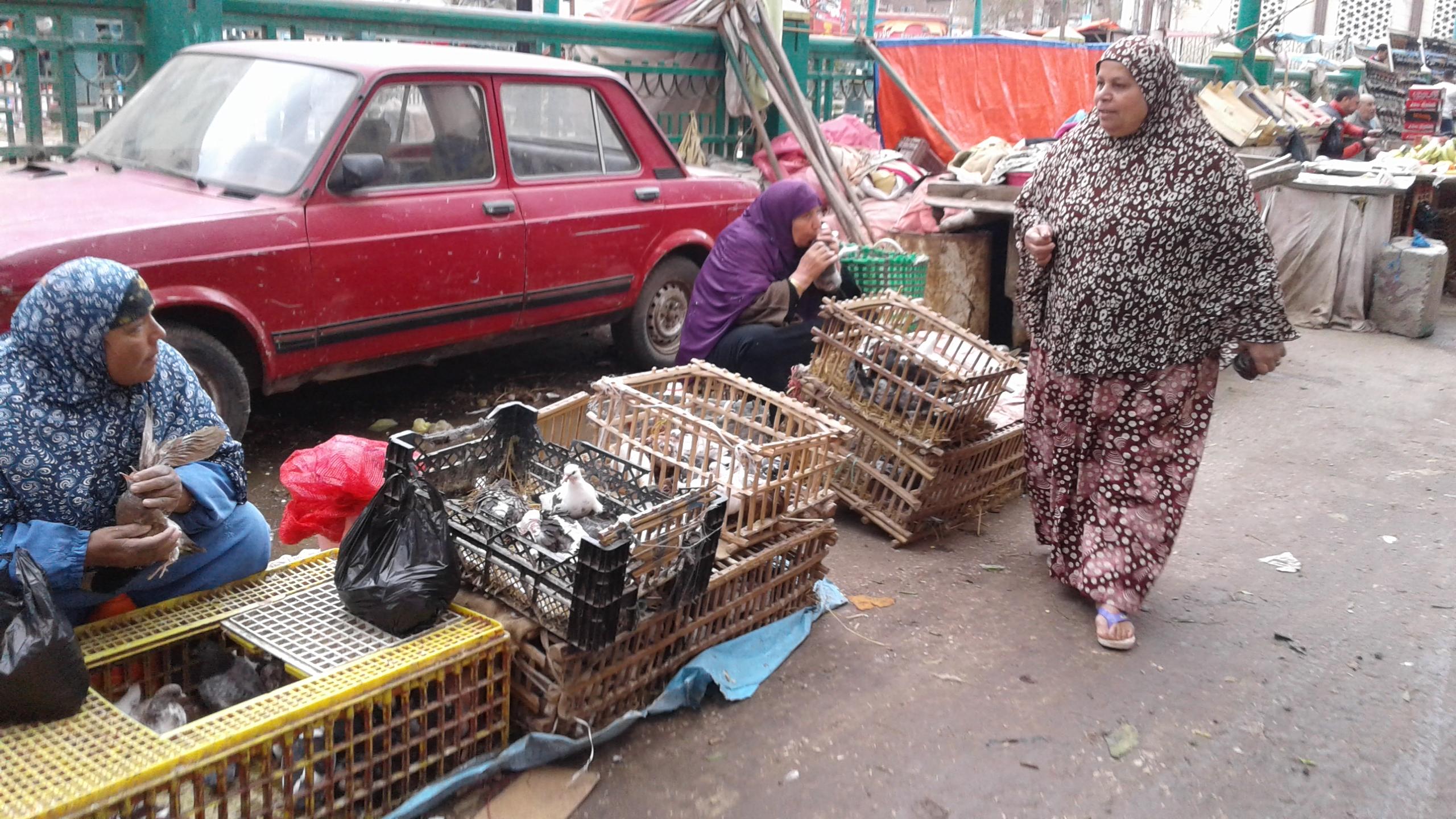 ذبح الطيور خارج المجازر ووسط الشوارع (2)