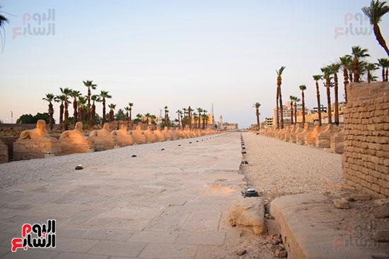 إحياء-طريق-الكباش-الفرعونى-العالمى-يحصل-على-4-خطوات-مميزة-(1)
