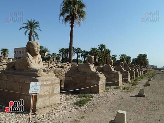 إحياء-طريق-الكباش-الفرعونى-العالمى-يحصل-على-4-خطوات-مميزة-(5)