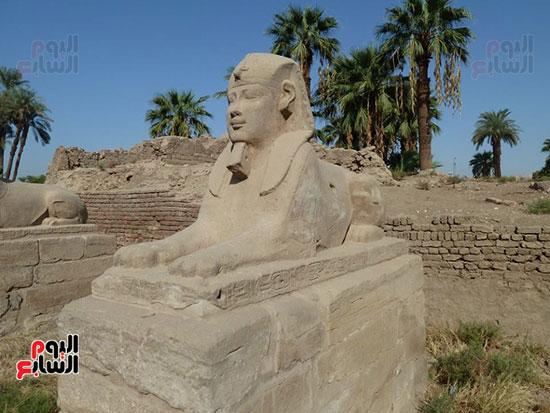 إحياء-طريق-الكباش-الفرعونى-العالمى-يحصل-على-4-خطوات-مميزة-(16)