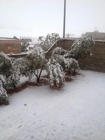 الثلوج-تكسو-الاشجار-والمبانى-فى-سانت-كاترين