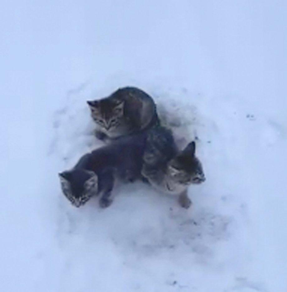 القطط الثلاثة