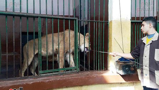 حديقة حيوان الإسكندرية (17)