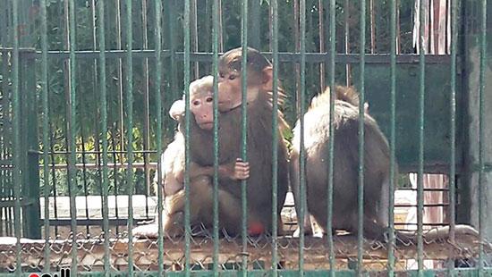 حديقة حيوان الإسكندرية (22)