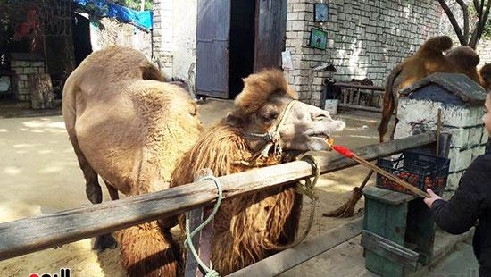 حديقة حيوان الإسكندرية (15)