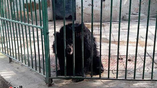 حديقة حيوان الإسكندرية (14)