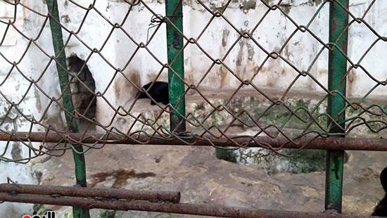 حديقة حيوان الإسكندرية (6)