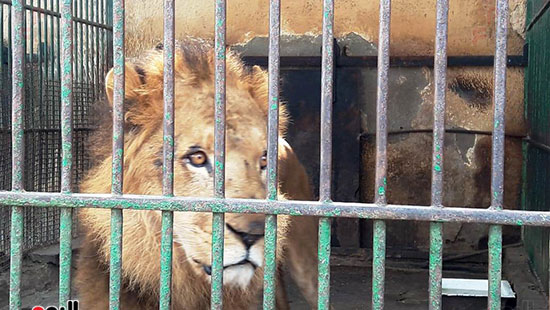 حديقة حيوان الإسكندرية (20)