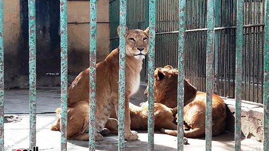 حديقة حيوان الإسكندرية (19)