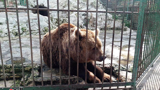 حديقة حيوان الإسكندرية (9)