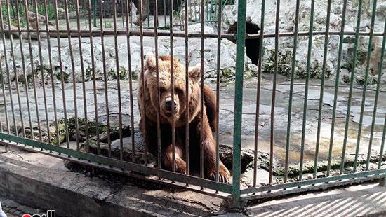 حديقة حيوان الإسكندرية (10)