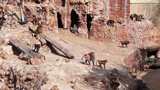 حديقة حيوان الإسكندرية (23)