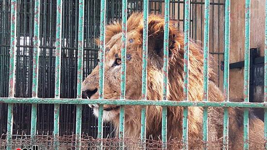 حديقة حيوان الإسكندرية (18)