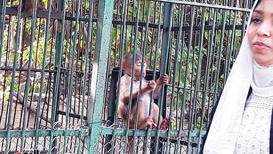 حديقة حيوان الإسكندرية (25)