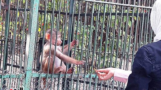 حديقة حيوان الإسكندرية (21)