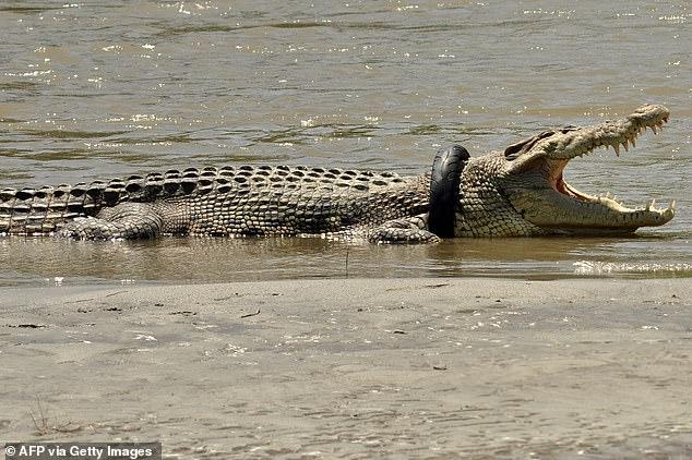 التمساح  (4)
