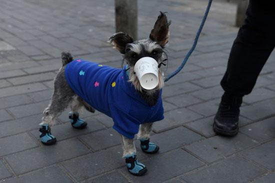 كلب يرتدي قناعا - كأسا بلاستيكيا