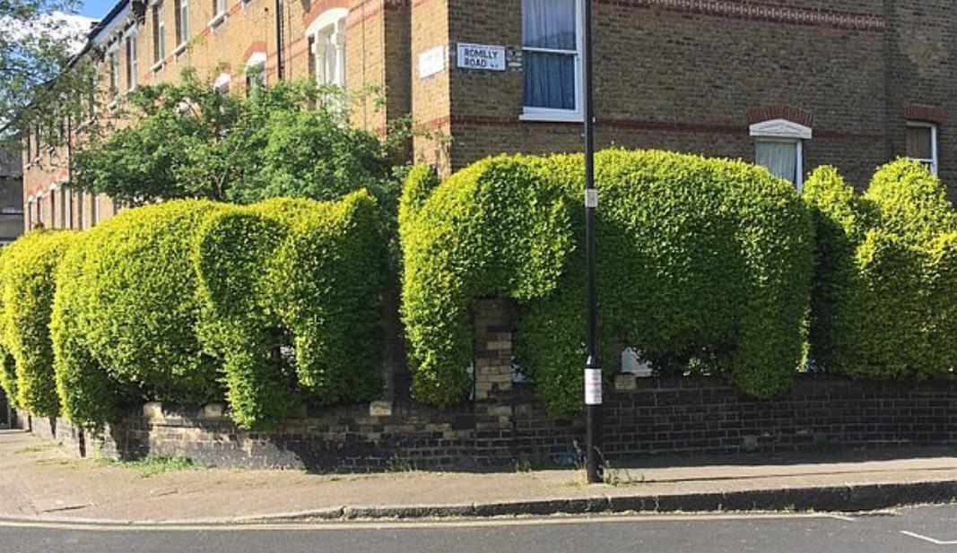 شكل فيل