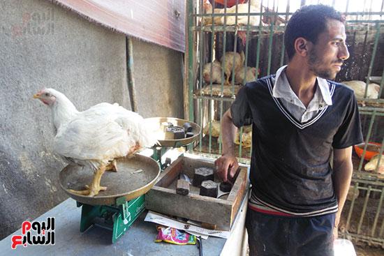 استمرار ذبح الطيور الحية بالمحافظات بالمخالفة للقانون (8)