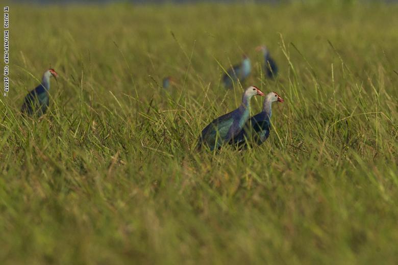 مجموعة طيور في أراضي Moe Yun Gyi الرطبة في ميانمار