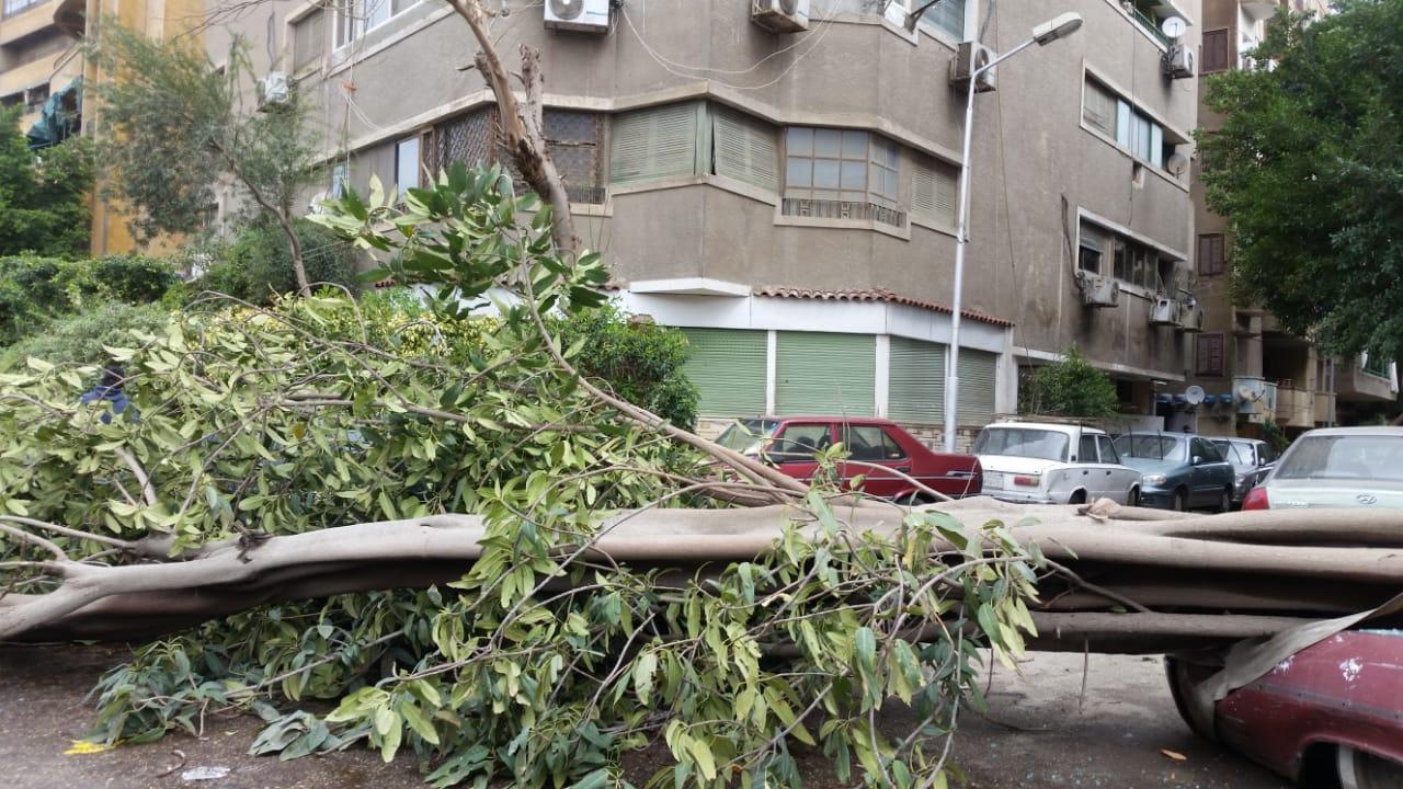 سوء الاحوال الجوية يسبب فى سقوط الاشجار على السيارات