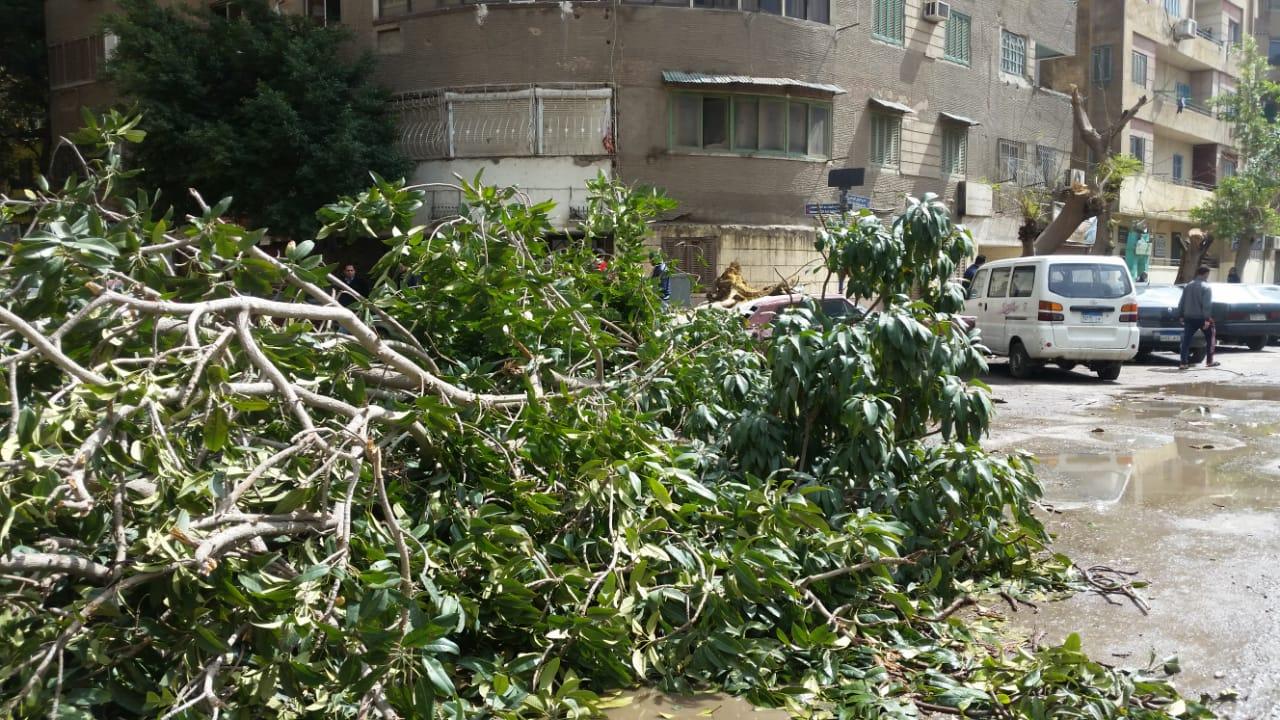 الشوارع مغللقة فى العجوزة بسبب سقوط الاشجار وغزارة المياة
