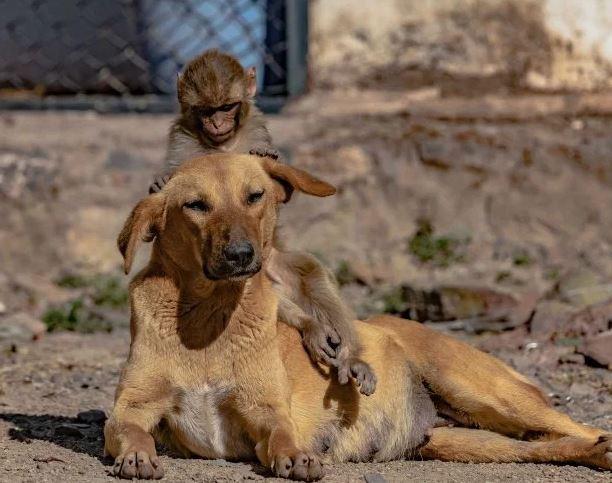 الأمومة ليست فقط للبشر.. كلب يبنى قرد صغير بعد تسمم أمه (1)