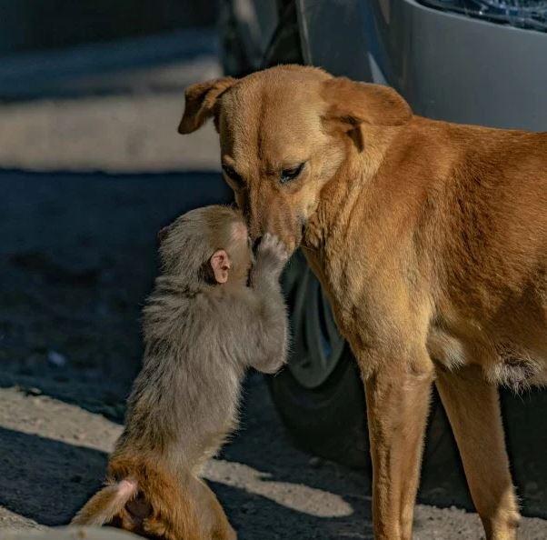 الأمومة ليست فقط للبشر.. كلب يبنى قرد صغير بعد تسمم أمه (3)