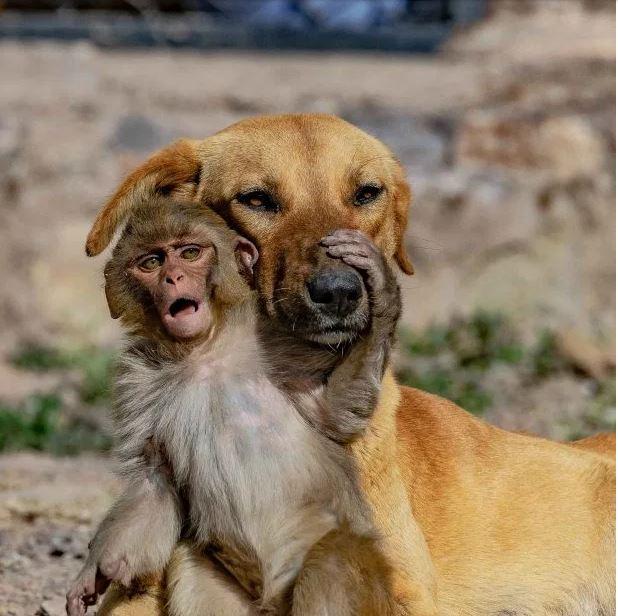 الأمومة ليست فقط للبشر.. كلب يبنى قرد صغير بعد تسمم أمه (2)