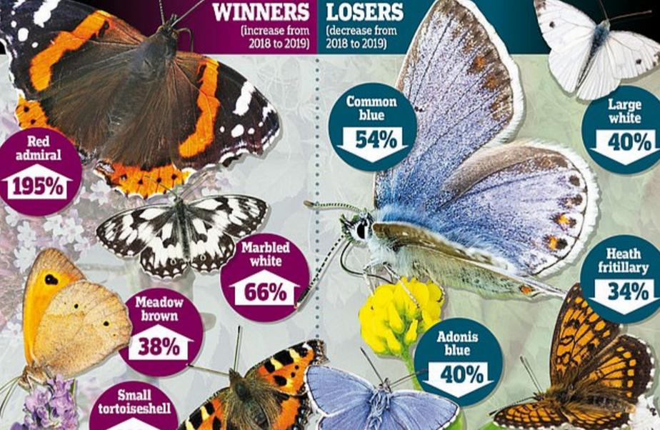تزايد أعداد الفراشات