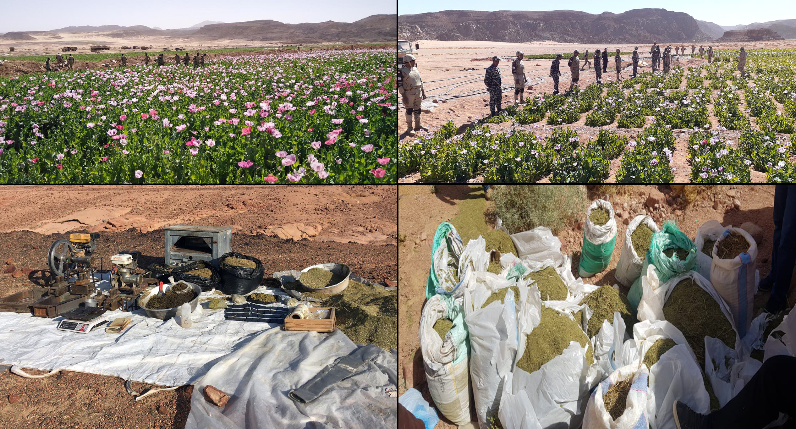 القوات المسلحة تقضى على مزارع مخدرات بسيناء
