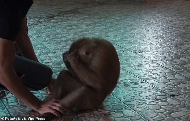 القرد يمارس الرياضة