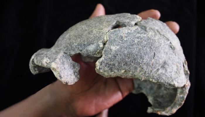 بقايا الجمجمة التي عثر عليها في إثيوبيا