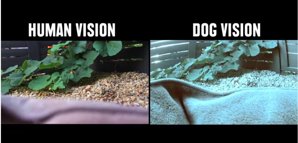 رؤية الكلب