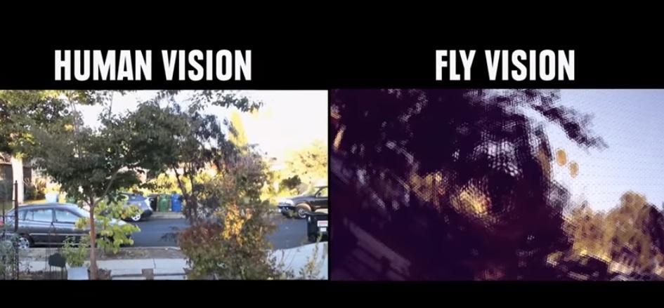 رؤية الذباب